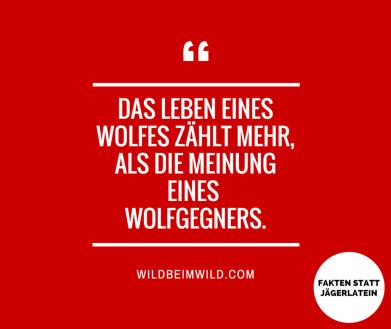 Das Leben eines Wolfes zählt mehr, als die Meinung eines Wolfgegners.