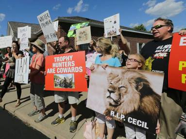 Proteste vor der Zahnarztpraxis des Jägers von Löwe Cecil: Eine verschärftes Gesetz soll nach dem Willen mehrere US-Senatoren die Trophäenjagd erschweren.