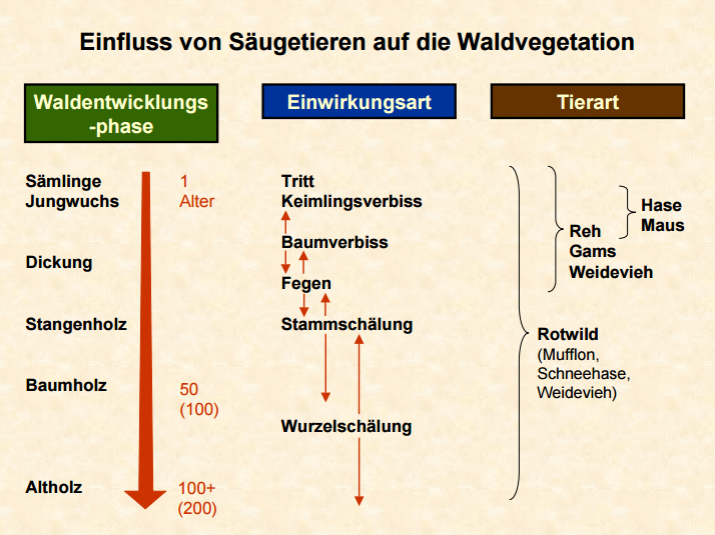waldvegetation