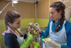 Die Mitarbeiter des Centre ornithologique de réadaptation (COR) retteten in den vergangenen Tagen einem Rotmilan das Leben.