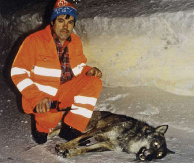 wolf-squaratti