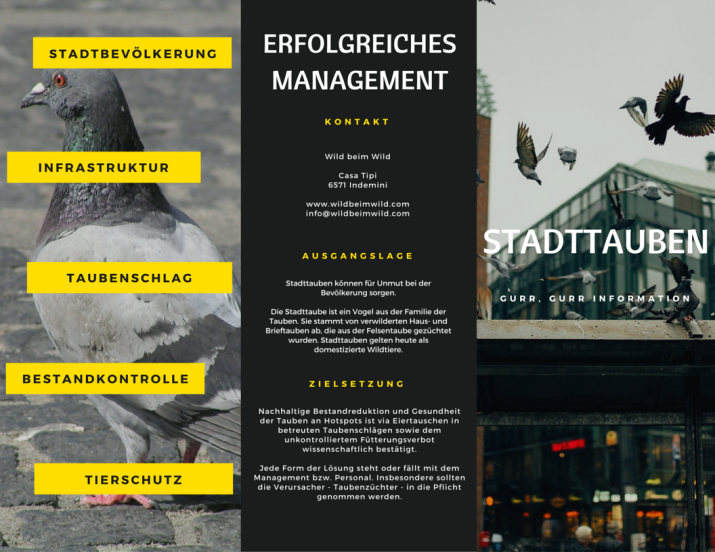 Erfolgreiches Stadttauben-Management