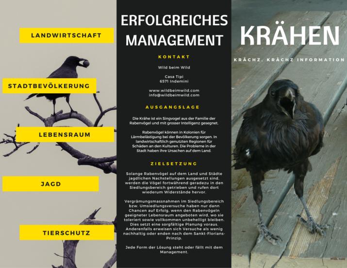 Erfolgreiches Krähen-Management