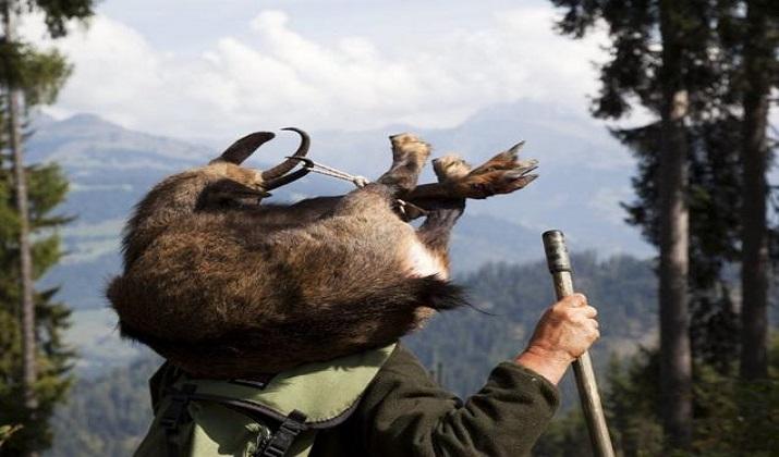 jagd-graubuenden